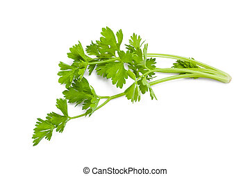 celery sprig isolated on white