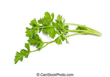 celery sprig isolated on white