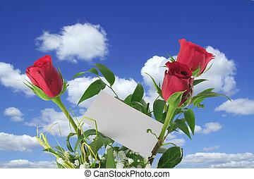 celestial, rosas, con, blanco, nota