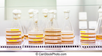 Cell culture samples on LB agar medium in petri dishes and ...