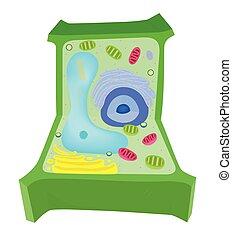 cell, diagram, växt