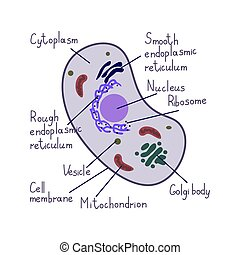 cell, eukaryote, vektor