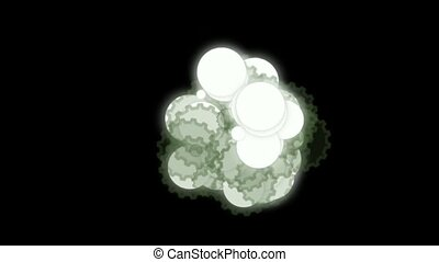 cell nuclear division