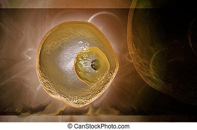 cell, ovum