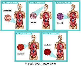 cell, slagen, medicinsk, vetenskaplig, illustration