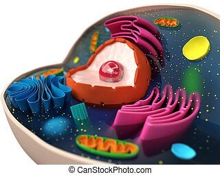 Cell structure - Anatomical structure of human or animal...