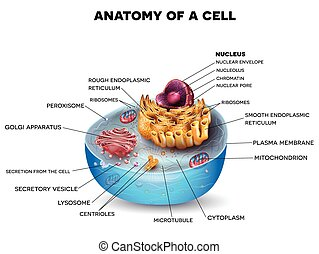 Cell structure, cross section of the cell detailed colorful...