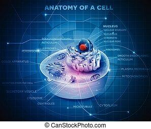 cell, struktur