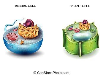 cell, växt, djur