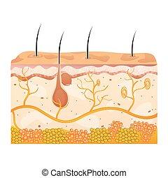 cellen, huid