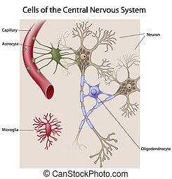 celler, av, den, hjärna