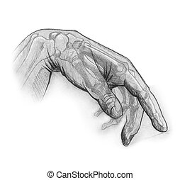 pencil sketch of the human hand (rendered by myself). illustrates the internal and external anatomy of the hand. great for uses in rehabilitation and occupational therapy.