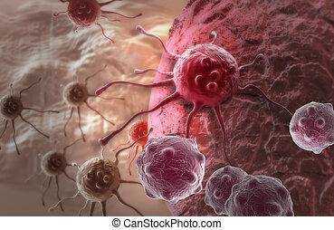 cellula, cancro