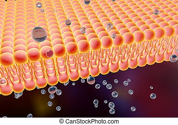 Cellular membrane with diffusion of molecules