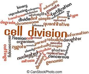 cellule, division
