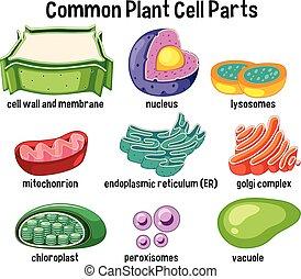 cellule, plante, parties, commun