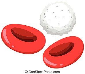 cellules, blanc rouge, sanguine