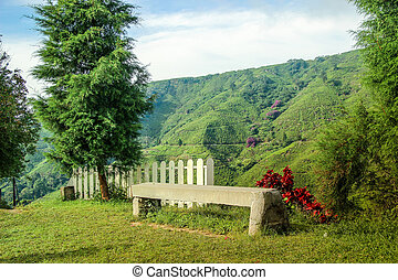 Cement bench at view point on the mountain, Tea plantation background