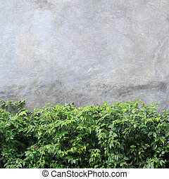 cement wall texture background with green leaf