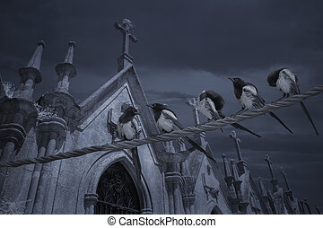 Cemetery bunch of magpies