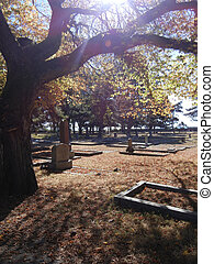Cemetery in autumn - Sunlight through tree branches in...