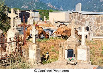 Cemetery in little Corsican mountain village