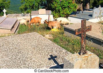 Cemetery in little Corsican village