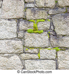 Cemetery Wall and moss closeup