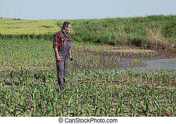 cena, campo, agrícola, milho, agricultor