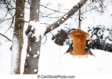 cena inverno, com, neve, e, pássaros