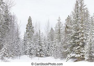 cena nevada, inverno