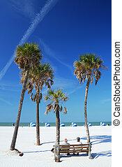 cena praia, com, palmas