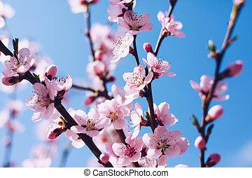 cena, primavera, florescer, orchard., natureza, flor, flare., experiência., sol, day., abstratos, árvore, obscurecido, bonito, flowers., springtime, ensolarado
