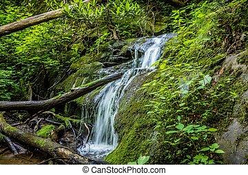 cenas, ao longo, appalachian, rastro, em, grandes montanhas...