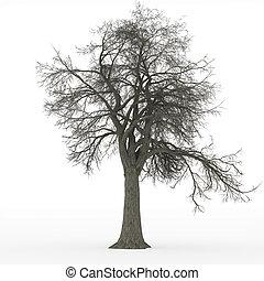 cendre, sans feuilles, arbre