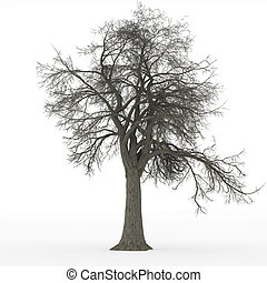 ceniza, deshojado, árbol