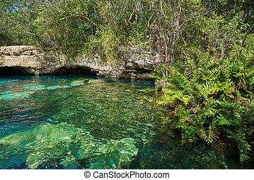 Cenote in Riviera Maya of Mayan Mexico sinkhole exposing ...