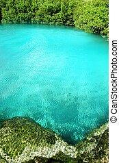 cenote, mangle, turquesa, agua, riviera maya