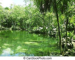 cenote Riviera Maya jungle mayan Quintana Roo - cenote lake ...