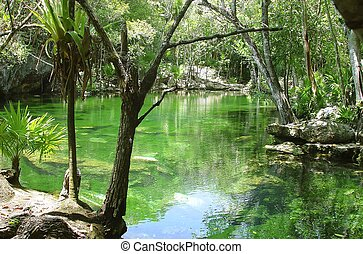 cenote Riviera Maya jungle mayan Quintana Roo - cenote lake...