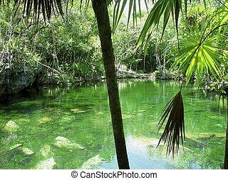 cenote, riviera, maya, selva, maya, quintana roo