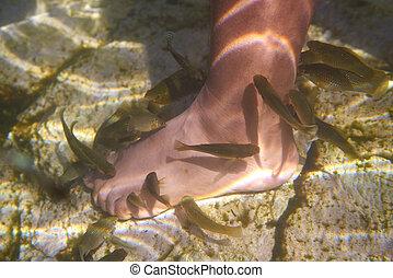 cenotes, messico, morto, piedi, pelle, pesci, succhiare