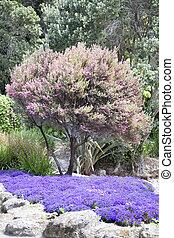 centenário, jardins, cores