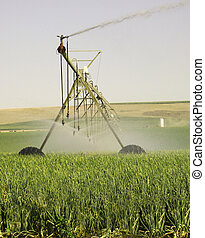 Center pivot or circle irrigation in onion fields in eastern Washington