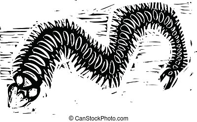 Centipede - Woodcut image of a scary centipede insect.