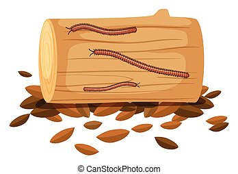 Centipede On Wood on White Background