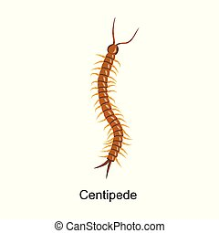 Centipede vector icon. Cartoon vector icon isolated on white background centipede .