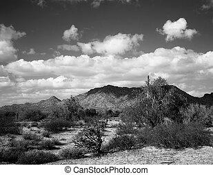 Black and white image of the central Arizsona desert