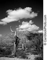 Black and white of the central Arizona desert