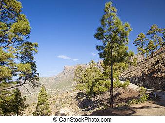 Central Gran Canaria